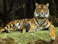 20 Days Yoga, Trek and Wildlife Tour in Roopkund, India